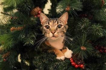 albero gatto